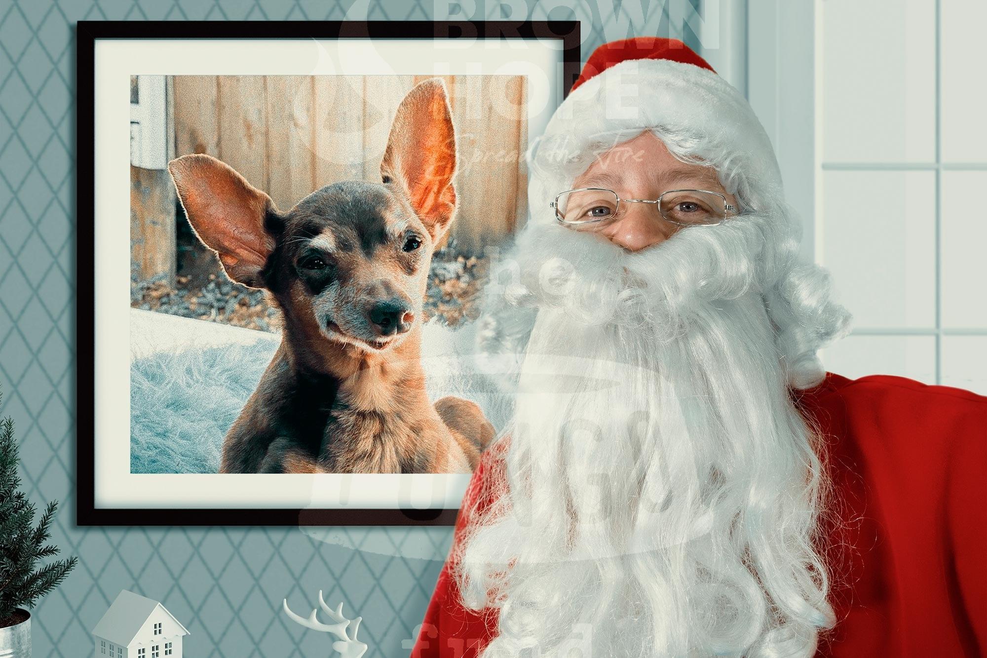 Santa Photos with your Pet